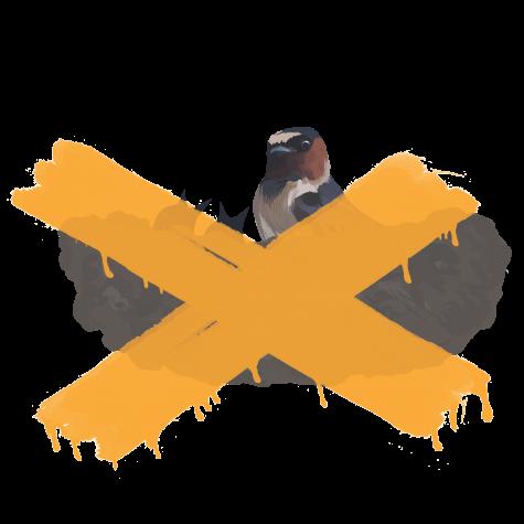 birdnest2